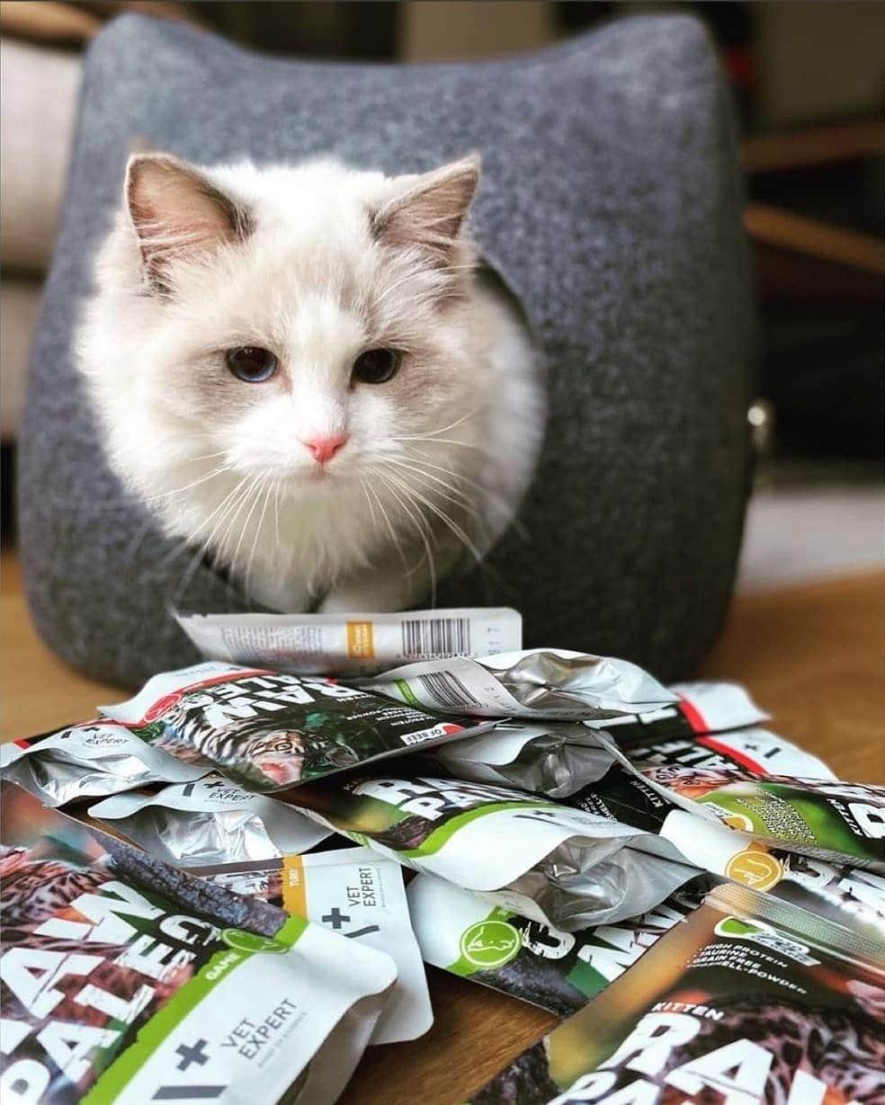 Raw Paleo Getreidefreies Katzenfutter Nassfutter Kittenfutter mit hohem Fleischanteil