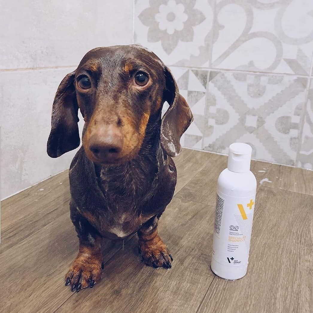 VETEXPERT Specialist Shampoo
