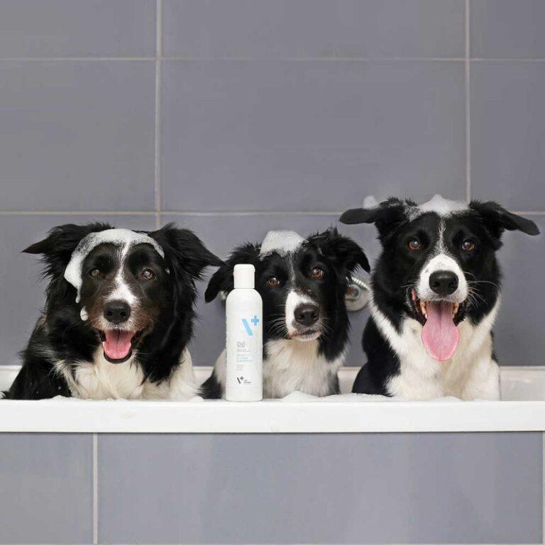 VETEXPERT beauty & care shampoo