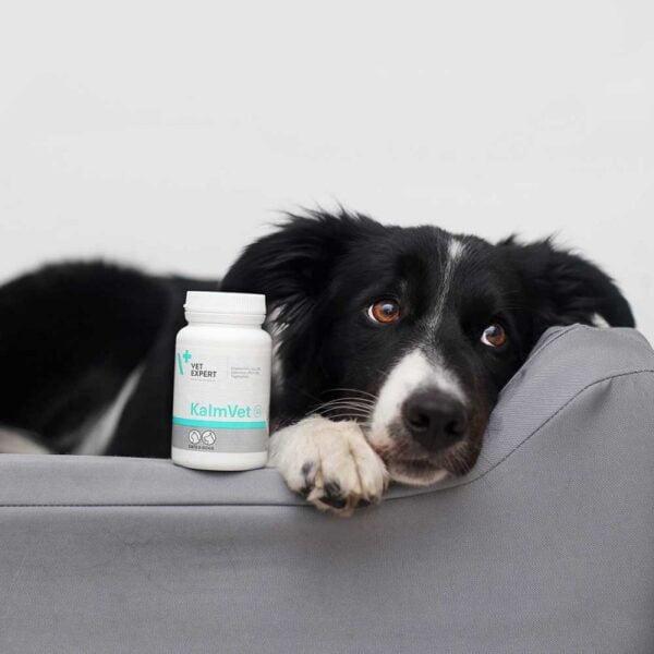 VETEXPERT KalmVET Tiergesundheit Österreich Beruhigungsmittel für Hunde