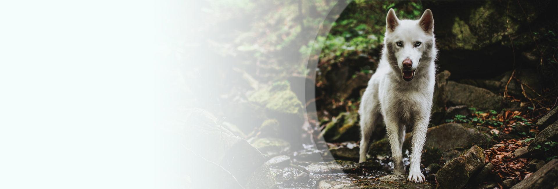 VETEXPERT Tiergesundheit Österreich Hundefutter Trockenfutter, Nassfutter oder BARFen